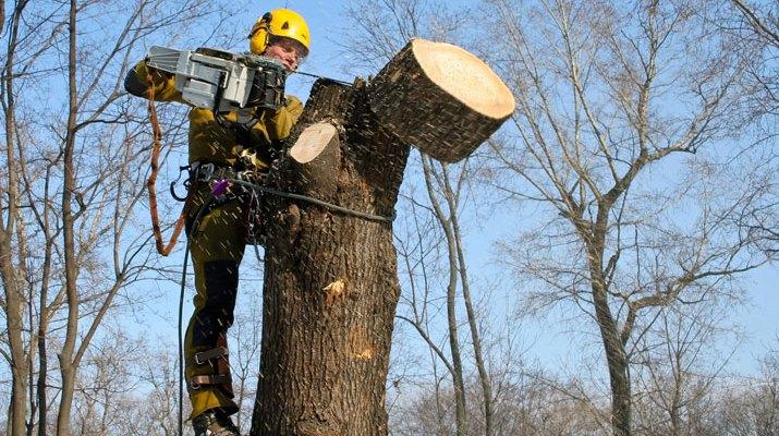 Спил дерева в аварийном состоянии