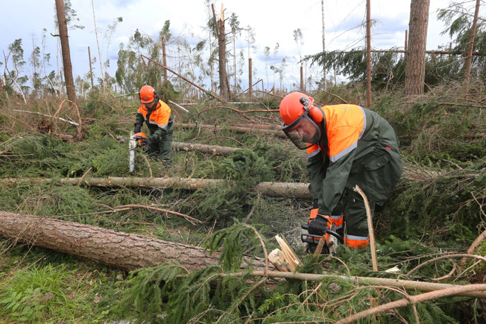 Валка деревьев - расчистка участка