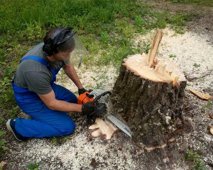 Вырубка деревьев под корень