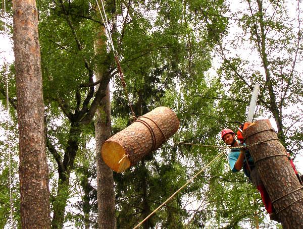 Валка деревьев альпинистом по частям