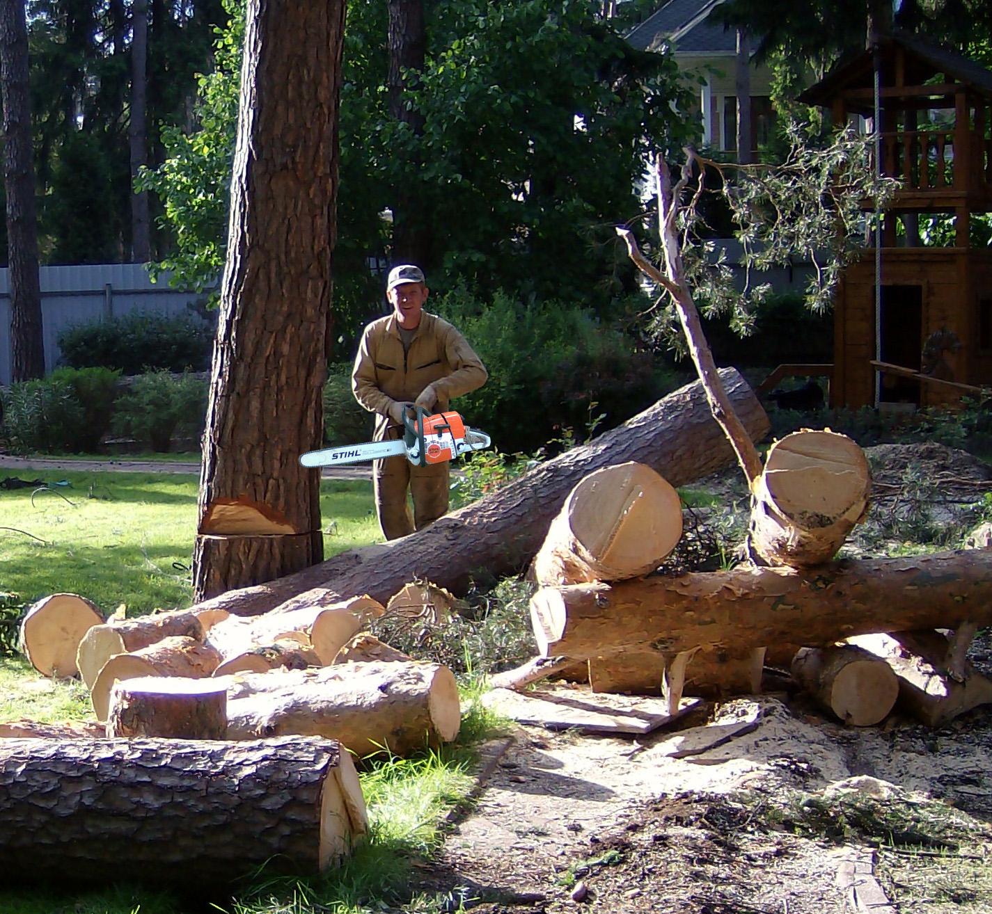 Вырубка деревьев возле частного дома