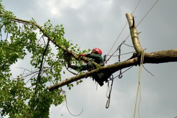 спил дерева альпинистом по частям