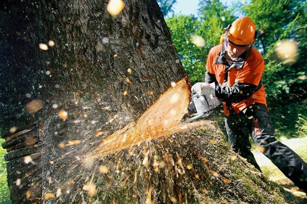 Удаление дерева альпинистом